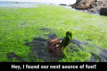 obama_algae.jpg